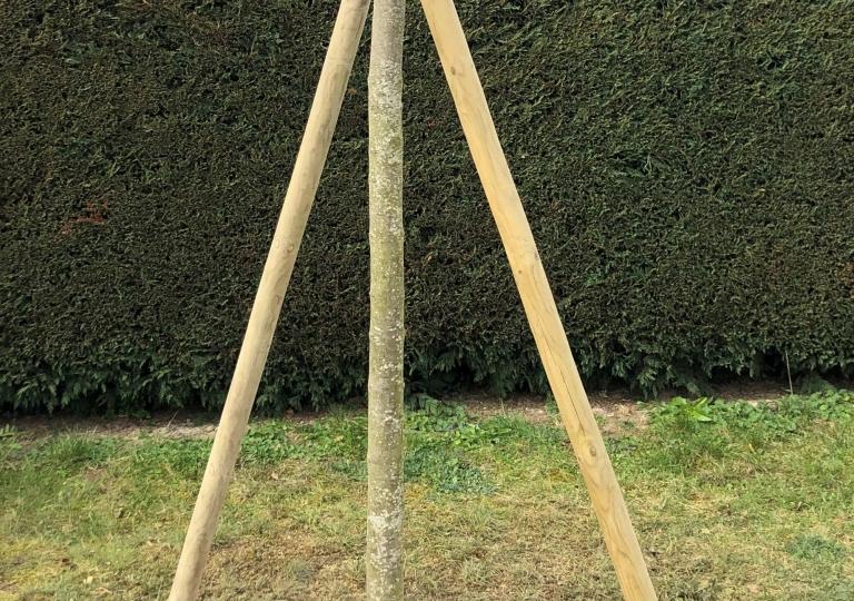 Mise en place de copeaux de bois au pied de l'arbre afin de garder l'humidité et la fraicheur