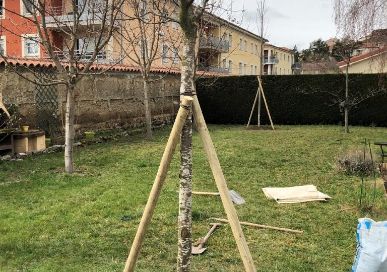 Plantation d'un arbre à Montbrison