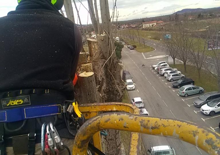 Abattage d'un peuplier d'Italie sur Montbrison
