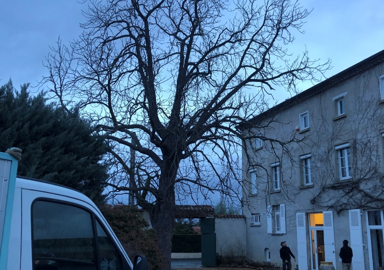 Chantier d'élagage à Montbrison (avant)_1
